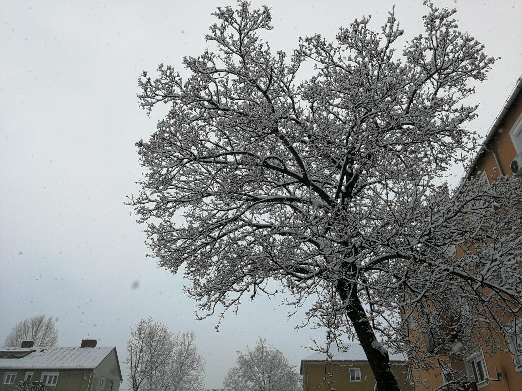 havas fa télen a városban szállingózó hópelyhekkel